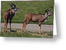 Wildebeest I Greeting Card