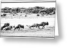 Wildebeest On The Move Greeting Card
