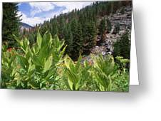 Wilderness Expedition Greeting Card