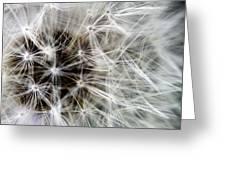 Wildflower 1 Greeting Card