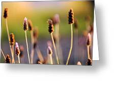 Wildflower 2 Greeting Card