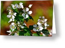 Wildflower 4 Greeting Card