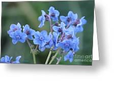 Wildflower 8 Greeting Card