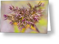 Wildflower Abstract Greeting Card