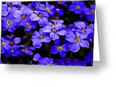 Wildflower Blues Greeting Card