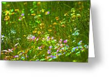 Wildflower Field Greeting Card