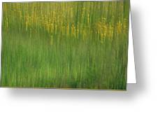 Wildflower Fields Abstract Greeting Card