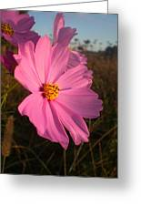 Wildflower Greeting The Day II Greeting Card