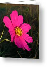 Wildflower Greeting The Day Greeting Card