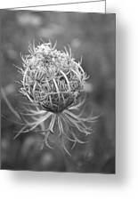 Wildflower I Greeting Card