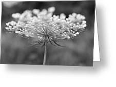Wildflower II Greeting Card