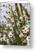 Wildflower,  Greeting Card