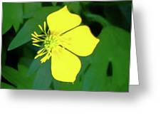 Small Sundrops Flower Greeting Card