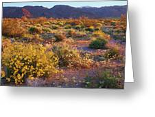 Wildflower Meadow At Joshua Tree National Park Greeting Card