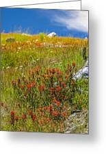 Wildflower Meadow With Indian Paintbrush Greeting Card