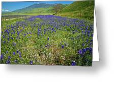 Wildflower Mix At Tejon Ranch Greeting Card
