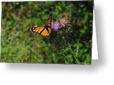 Wildflower Monarch Greeting Card