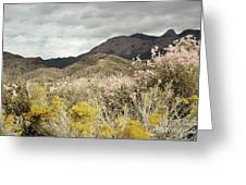 Wildflower Mountain Greeting Card by Andrea Hazel Ihlefeld
