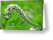 Wildflower Slide Greeting Card