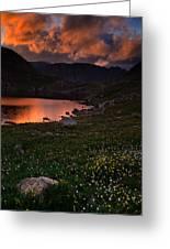Wildflower Sunset At Summit Lake Greeting Card