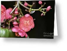 Wildflower Surprise Greeting Card