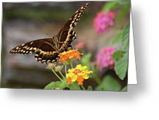 Wildflower Swallowtail Greeting Card