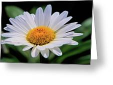 Wildflower  V9 Greeting Card