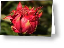 Wildflower Waratah Greeting Card