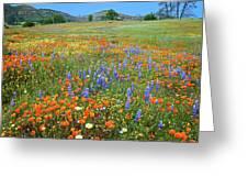 Wildflower Wonderland 4 Greeting Card