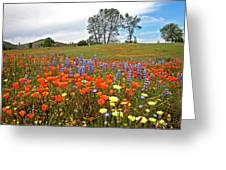 Wildflower Wonderland 5 Greeting Card