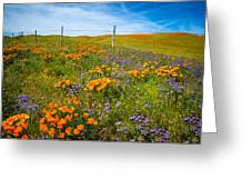 Wildflower Wonders Of The High Desert Greeting Card