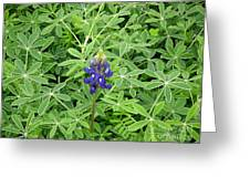 Wildflowers - All Alone And Blue Greeting Card