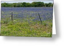 Wildflowers - Blue Horizon Greeting Card