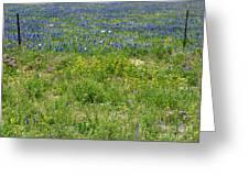 Wildflowers - Blue Horizon Three Greeting Card