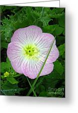 Wildflowers - In The Pink Greeting Card