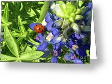 Wildflowers - Lucky Blubonnet Greeting Card