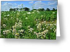 Wildflowers Along Country Road In Mchenry County Greeting Card