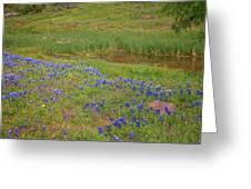 Wildflowers Along The Creek Greeting Card