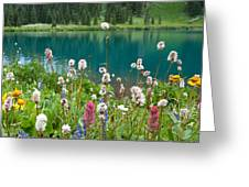 Wildflowers Along The Lake Greeting Card
