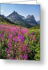 Wildflowers And A Glacier Greeting Card