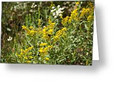 Wildflowers And Bee Greeting Card