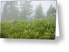 Wildflowers And Fog Greeting Card