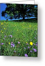 Wildflowers And The Oak Greeting Card
