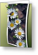 Wildflowers And Visitor Greeting Card