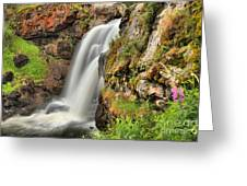 Wildflowers At Moose Falls Greeting Card