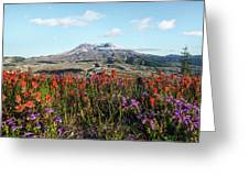 Wildflowers At Mount St Helens Greeting Card
