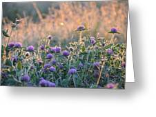 Wildflowers At Sunrise Greeting Card
