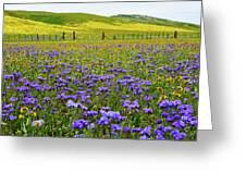 Wildflowers Carrizo Plain National Monument Greeting Card