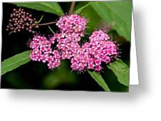 Wildflowers Come In Many Sizes Greeting Card