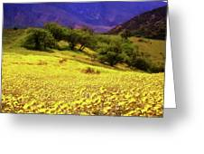 Wildflowers In The San Emigdio Mountains Greeting Card
